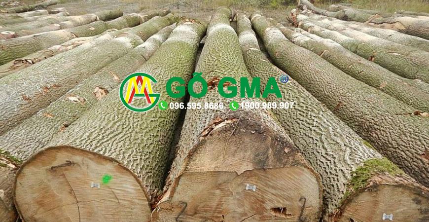 gotanbitron-GMA Việt Nam