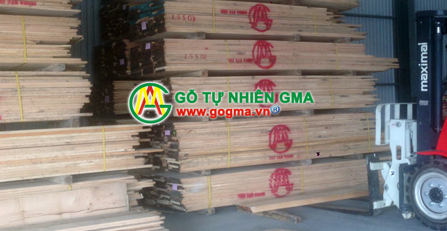gosoidomy-GMA Việt Nam