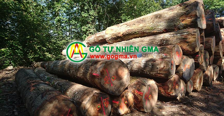 soimy-GMA Việt Nam