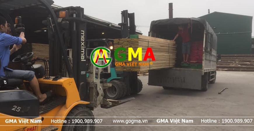 gỗ gma viet nam